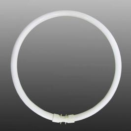 2GX13 T5 55W Ring-Leuchtstofflampe, universalweiß